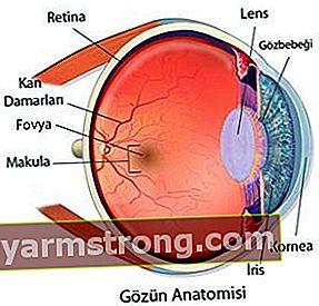 Qual è la struttura dell'occhio?