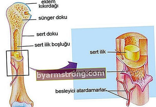 Cos'è il midollo osseo? Quali sono le malattie legate al midollo osseo?