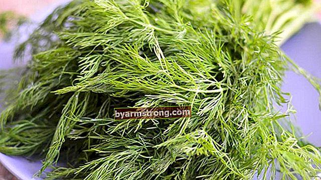 Quali sono i vantaggi di Dill Grass? Dove viene utilizzata la pianta di aneto?