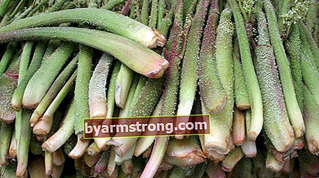 Quali sono i vantaggi dell'equiseto? Dove viene utilizzata la pianta del girasole?