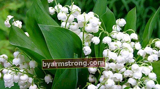 Fiore enorme: quali sono il suo significato, caratteristiche e vantaggi? Come mantenere?