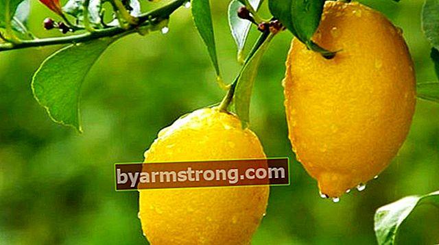 Quali sono le caratteristiche dell'albero di limone? Come mantenere?