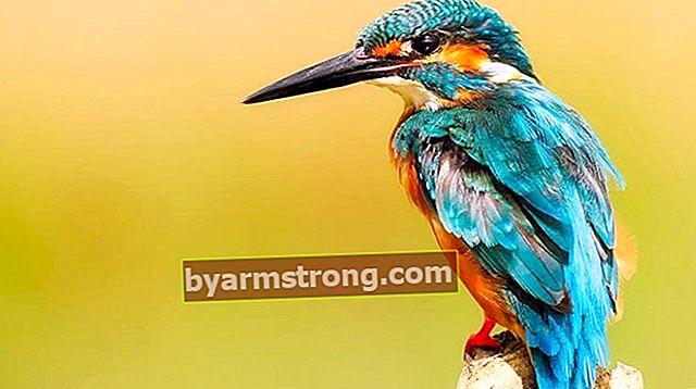 Apakah Spesies dan Nama Burung? Jenis dan Ciri Burung