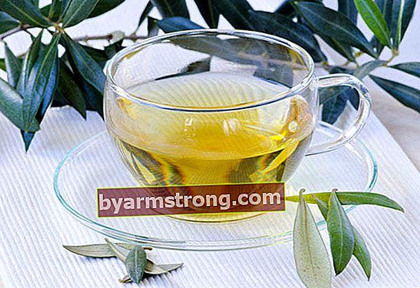 ชาใบมะกอกคืออะไรและทำอย่างไร? ชาใบมะกอกมีประโยชน์อย่างไร?