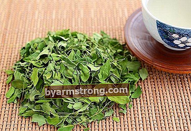 Apa teh daun kelor, bagaimana teh daun kelor digunakan?