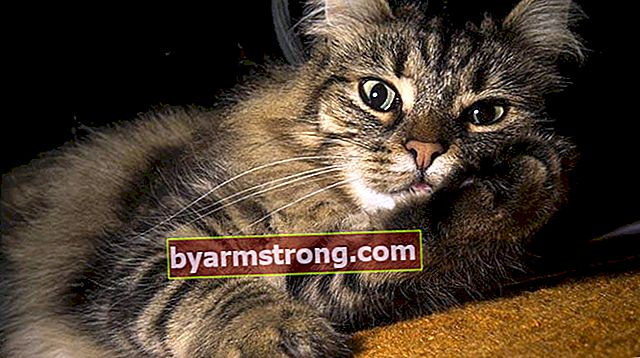 Apa Karakteristik Kucing Hutan Norwegia? Cara Merawat Anak Kucing Hutan Norwegia