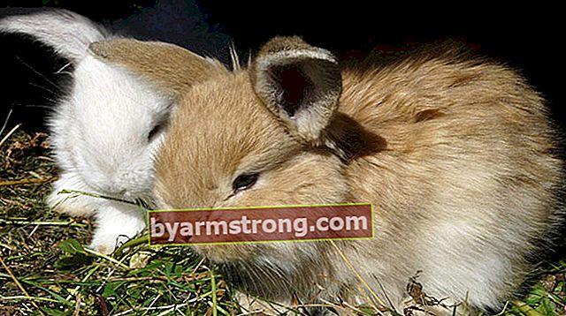 Bagaimana bersikap berteman dengan kelinci peliharaan?