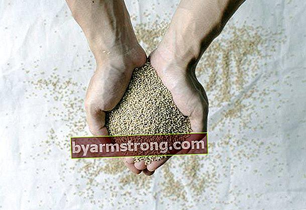 Cos'è la coltivazione della quinoa, come si fa la coltivazione della quinoa?