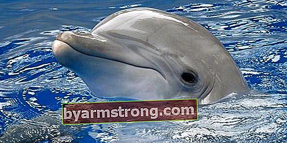 Cosa significa vedere Falda Dolphin? Cosa significa quando appare la forma di un delfino nei cupcakes al caffè?