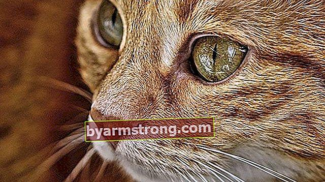 Apa Karakteristik Kucing Tabby? Bagaimana Cara Merawat Anak Kucing Tabby?