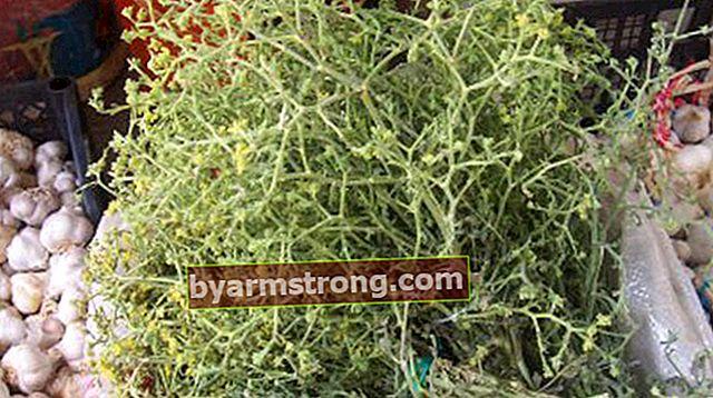 Quali sono i vantaggi di Tarhana Herb? Dove viene utilizzata la pianta dell'erba di selce?