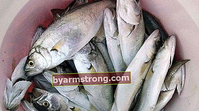 Sarıkanatの魚を調理する方法は?フライパンとグリルでイエローフィッシュを調理する