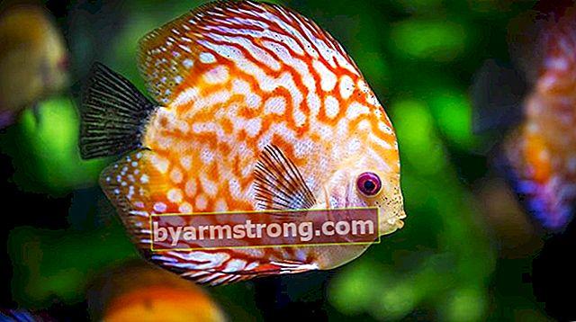 Apa Jenis dan Nama Ikan? Jenis dan Fitur Ikan