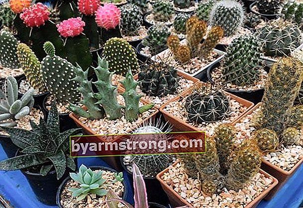 Tutto sulla pianta del cactus