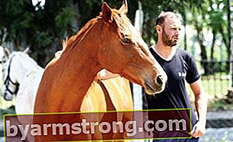Cavalli accoppiati 'consensualmente'