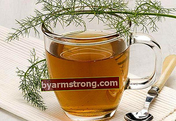 Apakah teh adas melemah?
