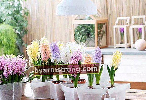 Fiori che possono essere coltivati in casa