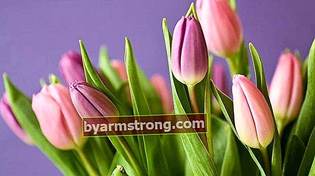 Cosa significa vedere i tulipani a Falda? Cosa significa quando una forma a tulipano appare nella tazza di caffè?