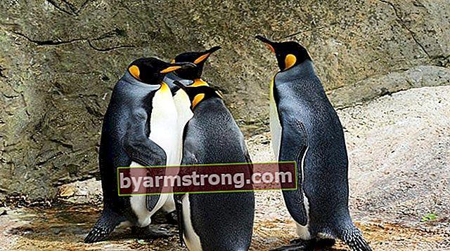 Cosa significa vedere un pinguino a Falda? Cosa significa quando appare la forma di un pinguino nei cupcakes al caffè?