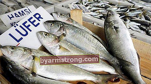Come cucinare il pesce azzurro? Cucinare il pesce azzurro in padella e griglia