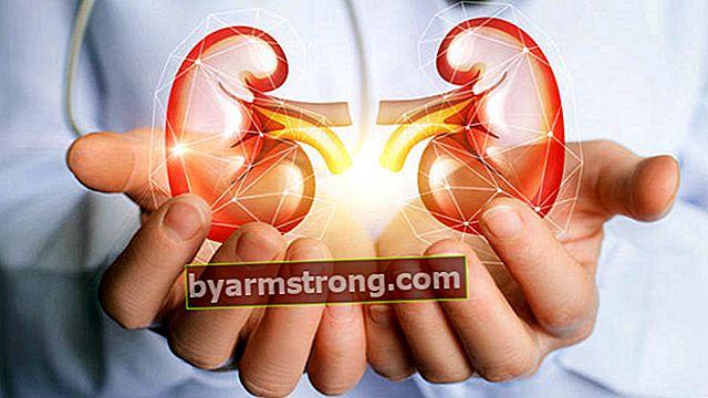 腎臓学とは何ですか、それは何を見ていますか?腎臓内科の医師(腎臓内科医)はどのような病気を探していますか?