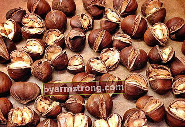 Manfaat luar biasa dari chestnut yang kaya