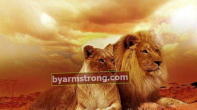 Cosa significa vedere un leone a Falda? Cosa significa quando appare la forma di un leone nei cupcakes al caffè?