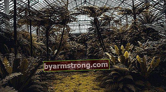 Cos'è un ecosistema? Quali sono i concetti legati all'ecosistema?