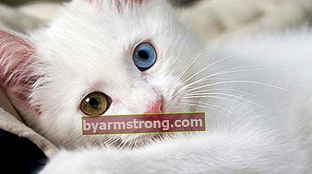 猫の品種と名前は何ですか?猫の種類と特徴