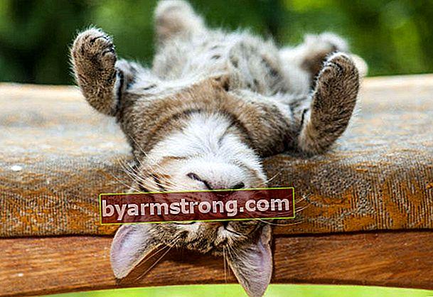 Ciri kucing yang paling menarik