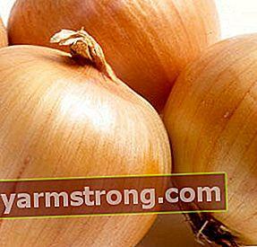 Manfaat penyembuhan bawang dan penyembuhan bawang