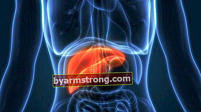 Qual è la funzione dei fegati? Dove si trova il fegato nel corpo e quali sono le sue caratteristiche?