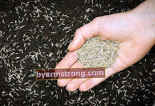 Come piantare i semi di erba?