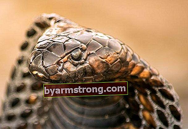 Modi per respingere i serpenti