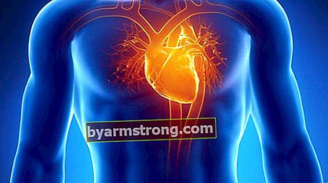 Apa Misi Hati itu? Di Mana Jantung Di Dalam Tubuh Dan Apa Karakteristiknya?