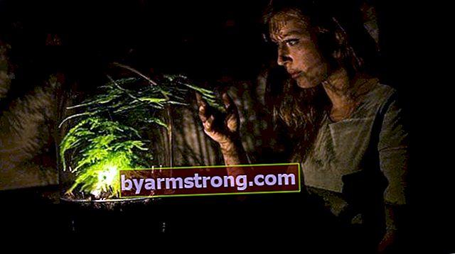 Cos'è la fotosintesi? Come avviene la fotosintesi?