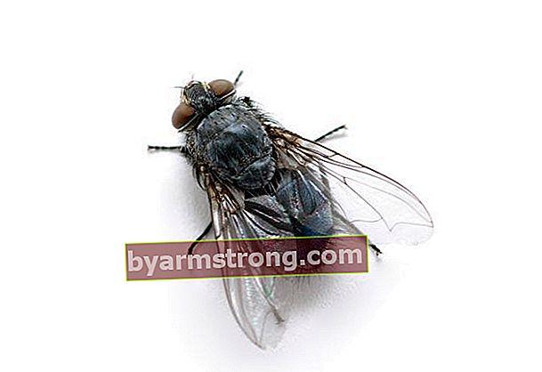 Pengusir lalat