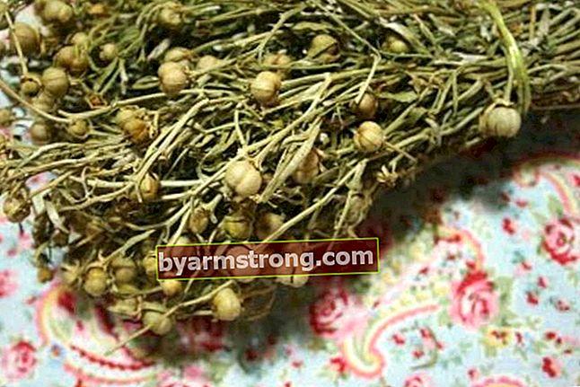 Quali sono i vantaggi di Peganum Harmala Herb? Come preparare il tè Peganum?