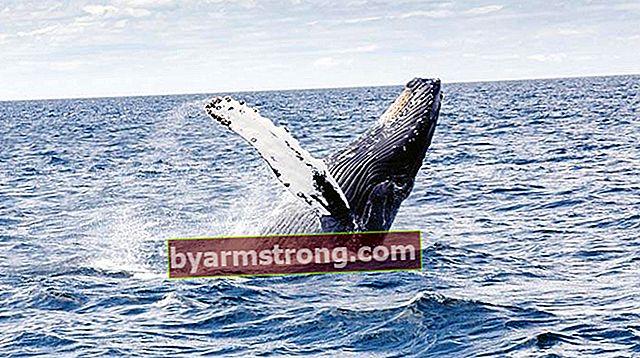 Cosa significa vedere Falda Whale? Che cosa significa l'aspetto della forma di balena nell'oroscopo del caffè?