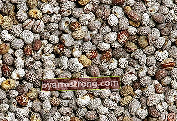 Cos'è il seme amaro, come si usa?