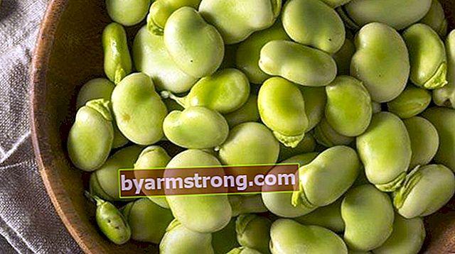 Come si cuociono le fave? Cottura delle fave secche e olio d'oliva