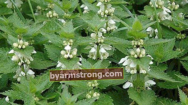Quali sono i vantaggi dell'Hammam Herb? Come usare l'olio per hammam?